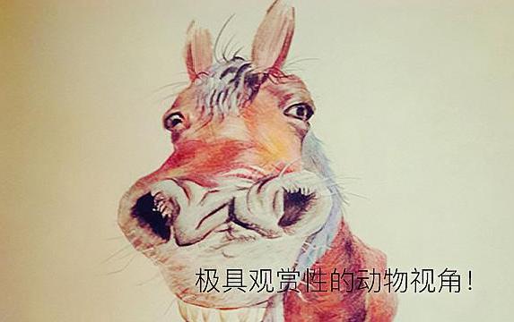 不一般的彩铅绘画,极具观赏性的动物视角!