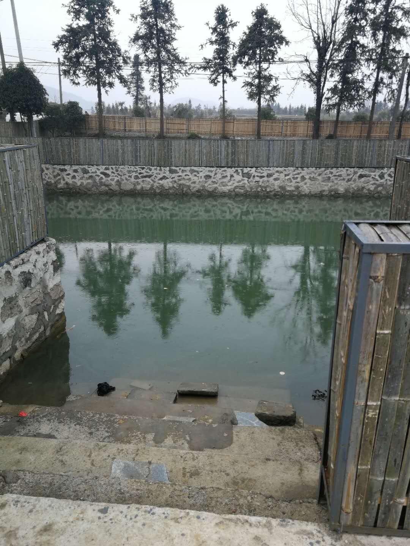 农村野池塘出水口设置一个捕鱼陷阱, 抓到好多这种鱼_图片