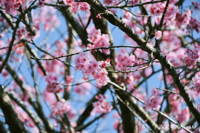 2019年最新阿里山花季时间、赏樱路线、阿里山景观民宿推荐 推荐 第4张