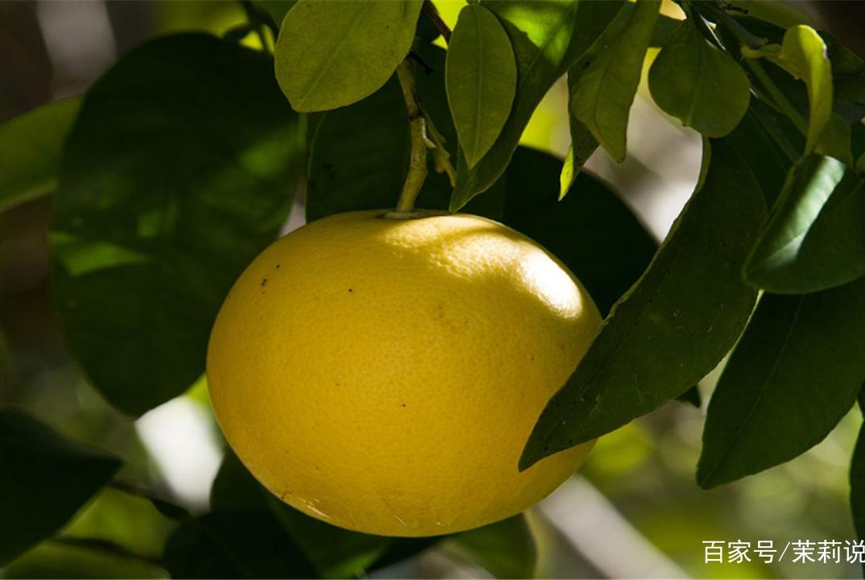 糖尿病人不能吃水果?这3种水果可以放心吃,或许血糖也很稳