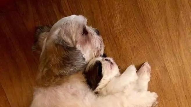 狗麻麻生了三个宝宝,而其中一只骨骼很是惊奇……