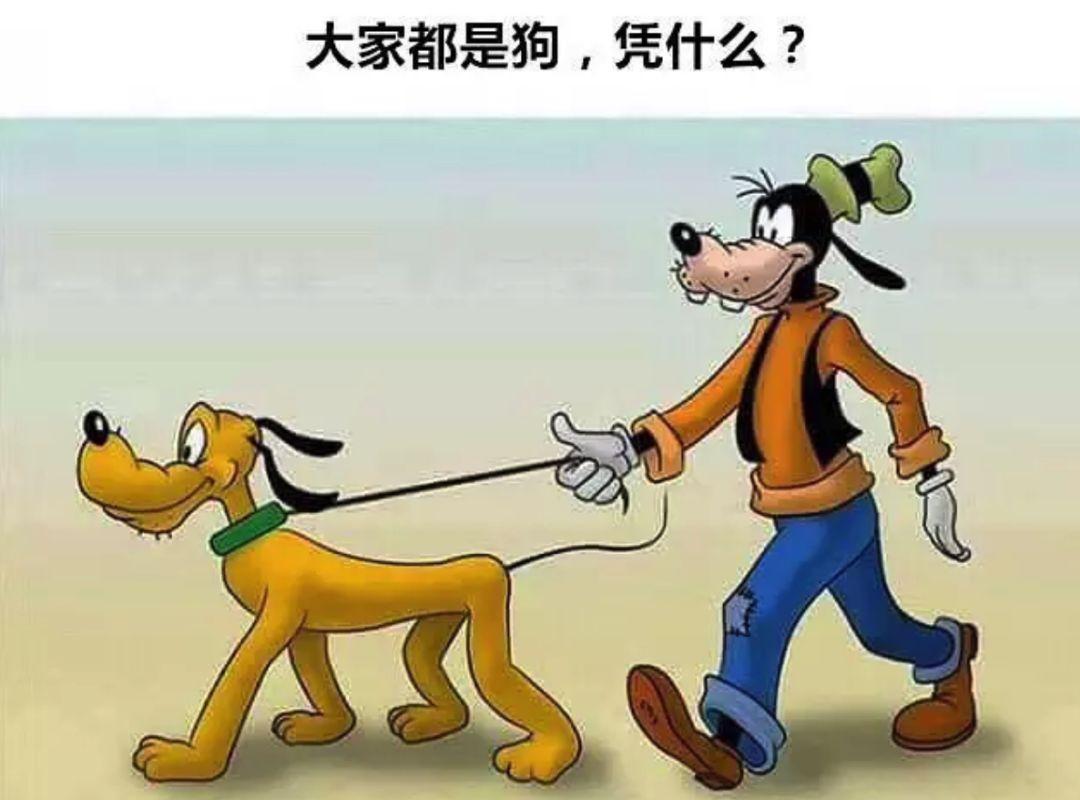 太秀_遛狗神操作:狗狗自己遛自己也太秀了,给捡屎官省了不
