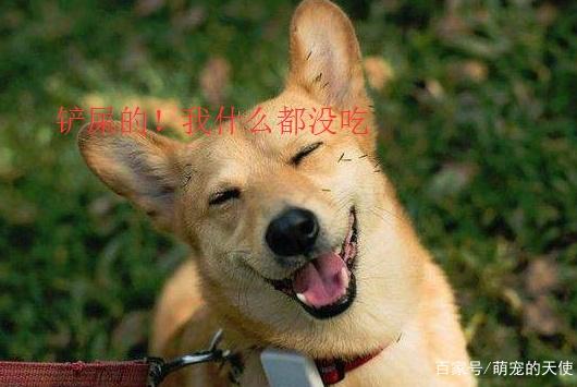 十个瞬间告诉你,狗狗有多善良:铲屎的!你对我来说很重要