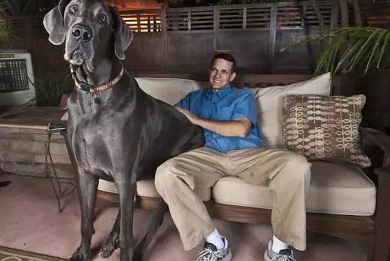 一分钟守住十只球的天才守门员,没想到是条狗还破了吉尼斯纪录