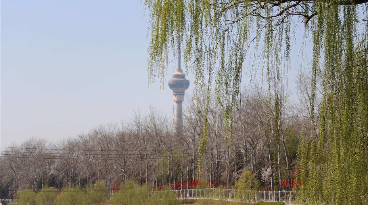 遇见北京的春天:玉渊潭赏花