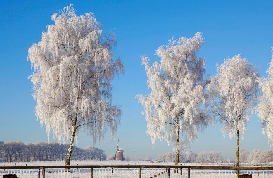 「诗词鉴赏」诗词里冬天的柳树,平凡中写满了不平凡!