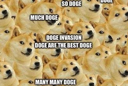 这只狗有多火?全世界超过20亿人在用它做表情包!