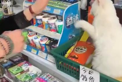 网友伸手想摸今日特价的猫咪,却遭猫咪拒绝:特价猫不买不让撩!