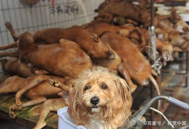 哪种人不能吃狗肉_冬至吃狗肉的传统到底从何而来?现在还有人吃吗