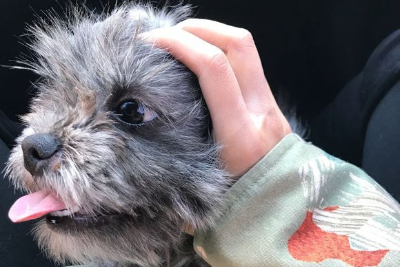 路上捡到只小流浪狗,女孩养了三个月后,意外得知来历忍不住乐了