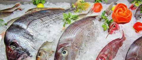 海产鱼_龙利鱼是属于海产鱼,营养元素比较丰富,龙利鱼富含较高的不饱和脂肪