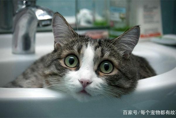 在家看不到猫,只能看到猫屁股?猫咪为何总是用屁股对着铲屎官