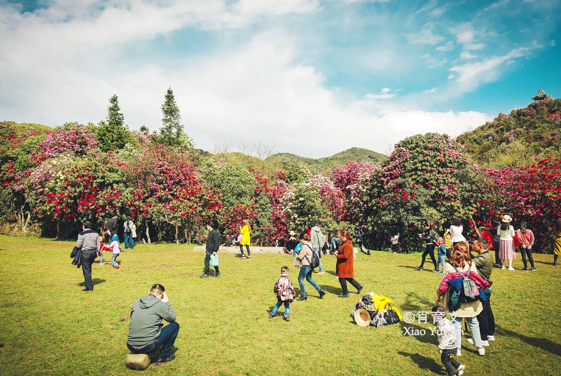 贵州有块中国最大的杜鹃花园,百里繁花绘成地球彩带,美到窒息