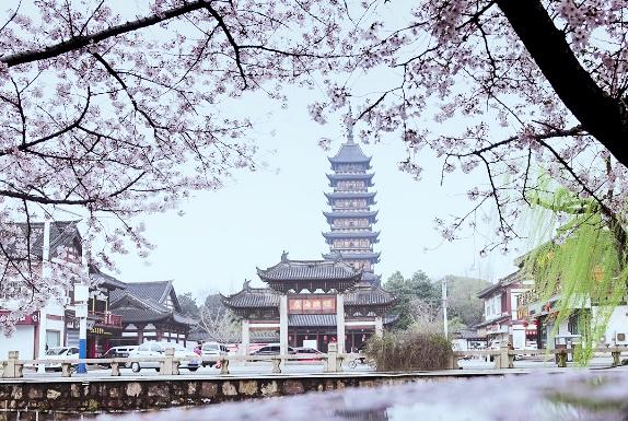 """樱花季,杭州西湖下起了""""樱花雨"""",游客:偶买嘎,这也太美了吧"""