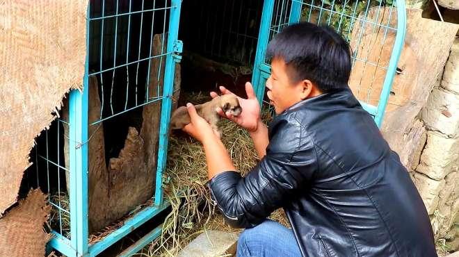 小奶狗掉出笼子,农村小伙假装要抱走,母狗的反应亮了!