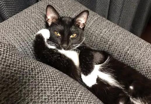 猫咪身上原来还有这样的宝贝,很多猫咪都不知道