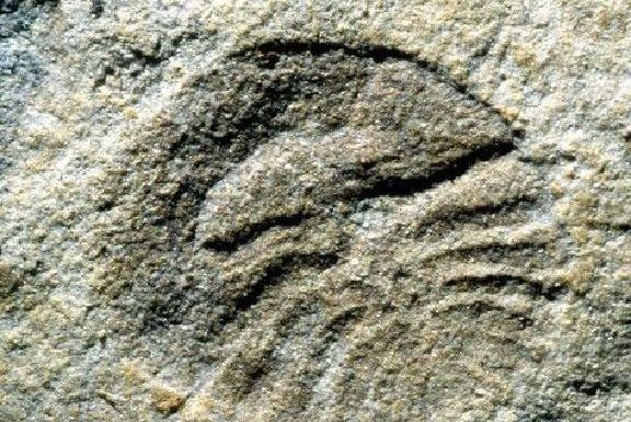 生命起源之谜将被揭开,原来人类起源于5.5亿年前的细菌?