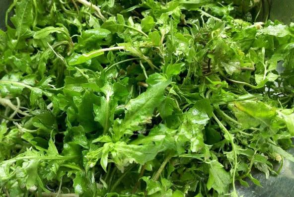 """春天的""""5种""""野菜,很多人当杂草扔掉,城里人花钱都难买!"""