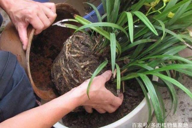 """盆栽花卉,土壤成""""硬块"""",把""""1种溶液""""倒进去,2天变松软!"""