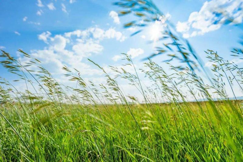 呼伦贝尔大草原旅游必去的十二个景点及门票攻略