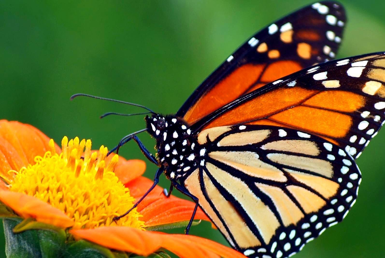 动物的蜕变,在生物学上有什么意义?科学家称为了适应其他食物