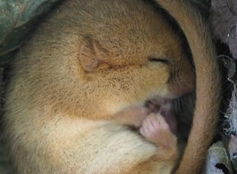 世界上最懒的动物:寿命只有5年,睡觉就花了4年,饿死也