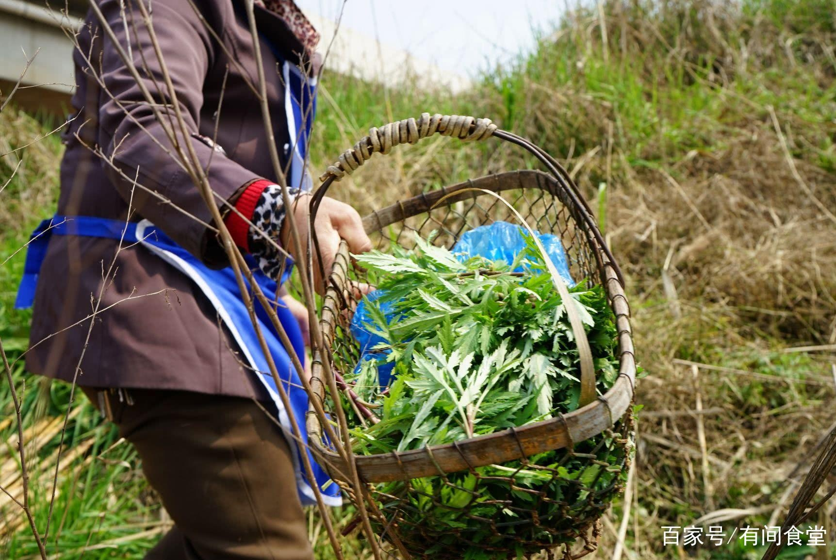 三月河边野菜疯长,村民狂捡!捡一斤卖几十块,炒出来就是名菜