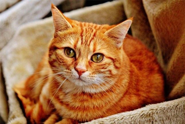 对猫来说天越热家中隐患越多,而且这些都来自家中常见物品