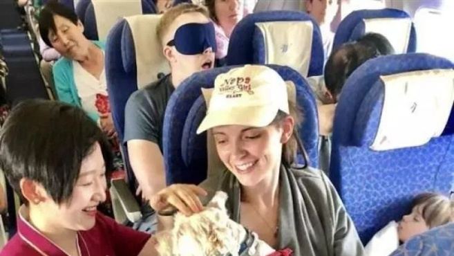 飞机上坐了只大型犬……这么大的狗能进客舱?南航回应