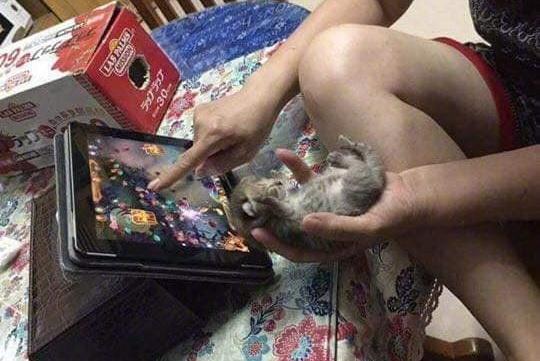 小猫咪遇见了小兔几,谁知道他们在说什么?