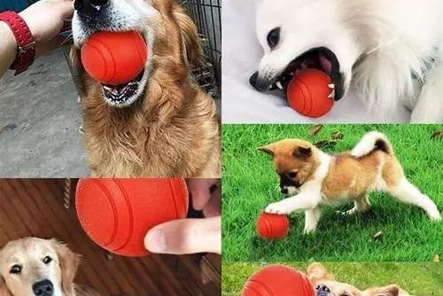 狗狗们到底有多喜欢玩球呢?
