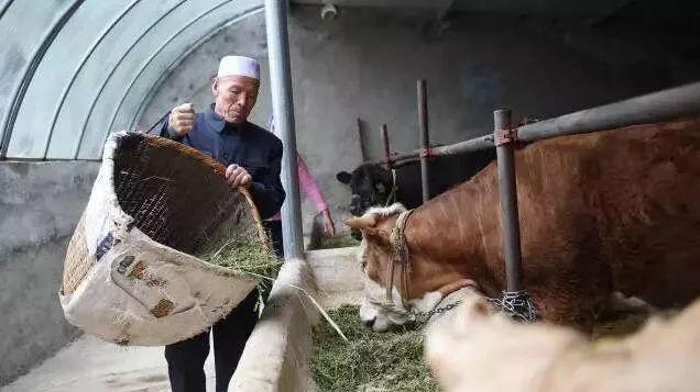 总书记和他的农民老弟