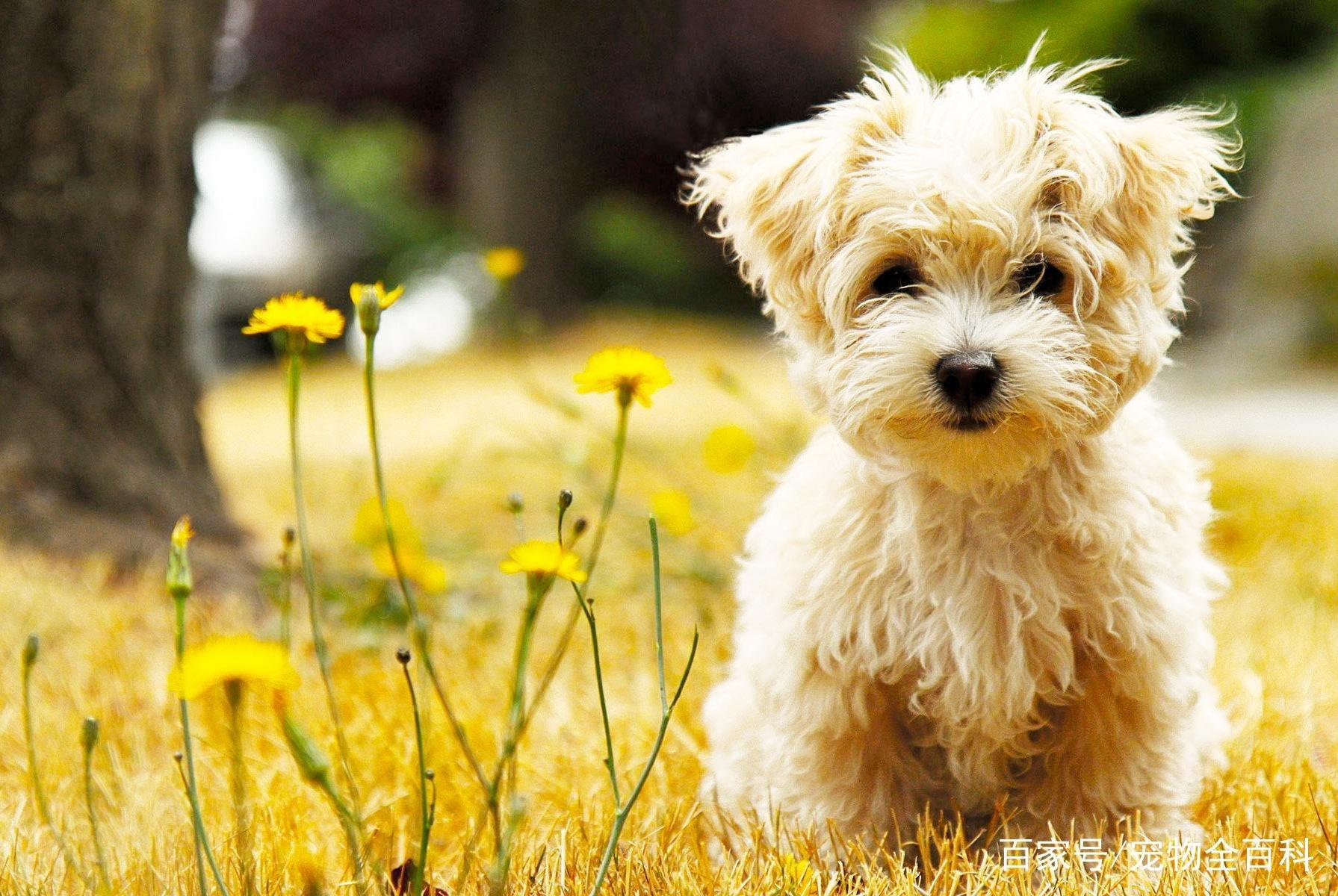 养宠物有快乐但也有烦恼,你认为宠物带给你最大的烦恼是什么?