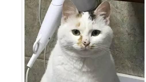 猫猫小时候VS长大后,铲屎官们都开始怀疑人生了,哈哈哈!