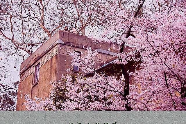 和服、唐装、樱花、武汉大学,几个风马牛不相及的事物引发的冲突