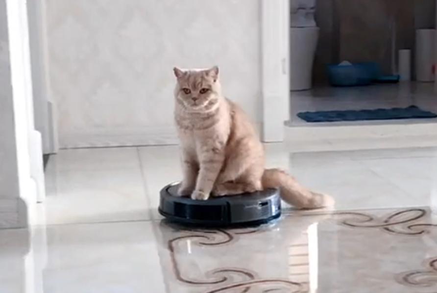 橘猫爱玩扫地机,一开动就蹲上面玩,猫:这是朕的移动江山……