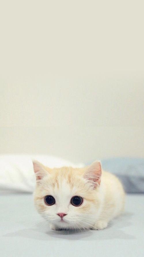 壁纸 动物 猫 猫咪 小猫 桌面 500_889 竖版 竖屏 手机图片