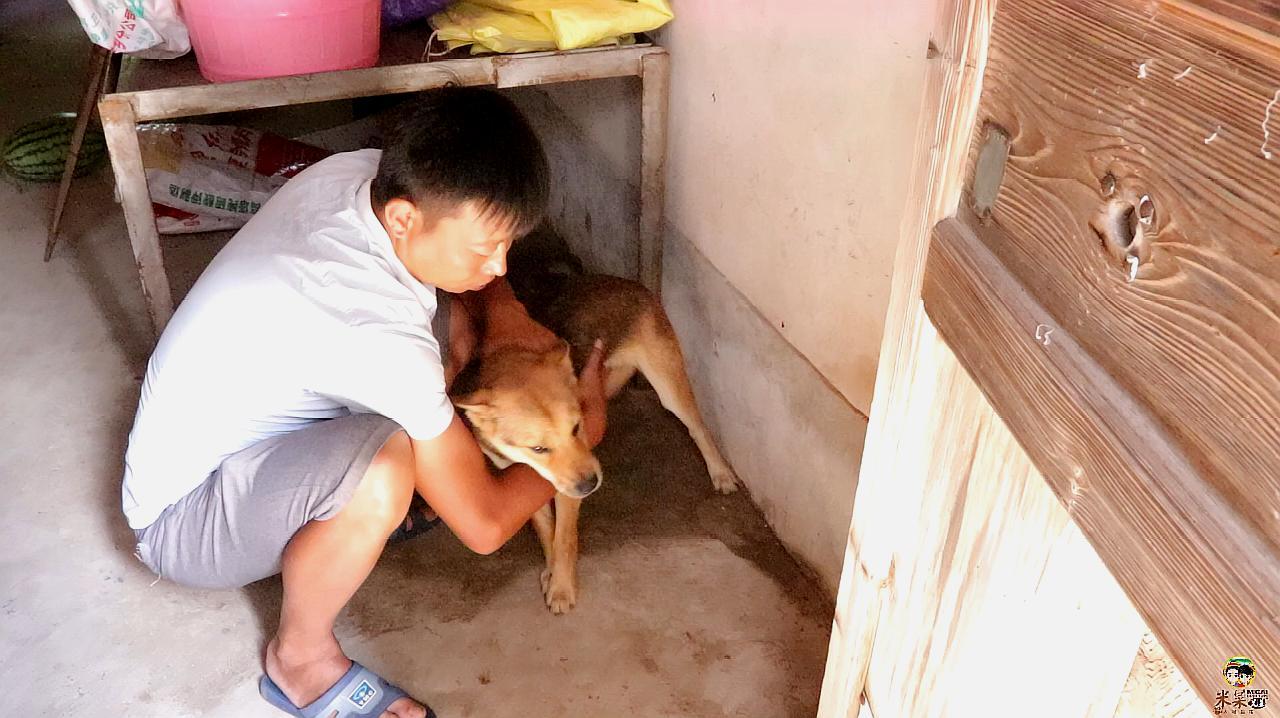 主人想去野外遛狗,狗狗却躲了起来,找到后发现狗狗中暑了!