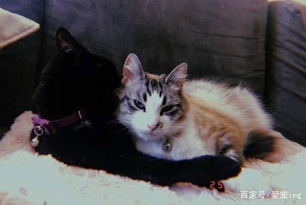 猫看到已故猫朋友的毛发后,做出的举动让主人梗塞