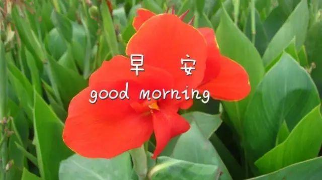 早安心语励志的一句话,句句振奋人心!