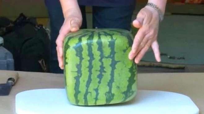 日本天价方形西瓜:小伙一刀切开,之后的一幕让人看傻眼!