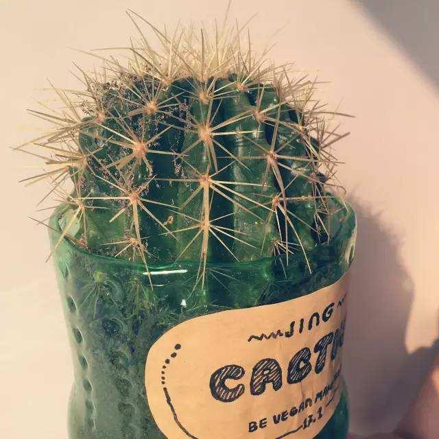 用一些可乐瓶,矿泉水瓶,秒变养花神器,种出几十盆花草蔬菜