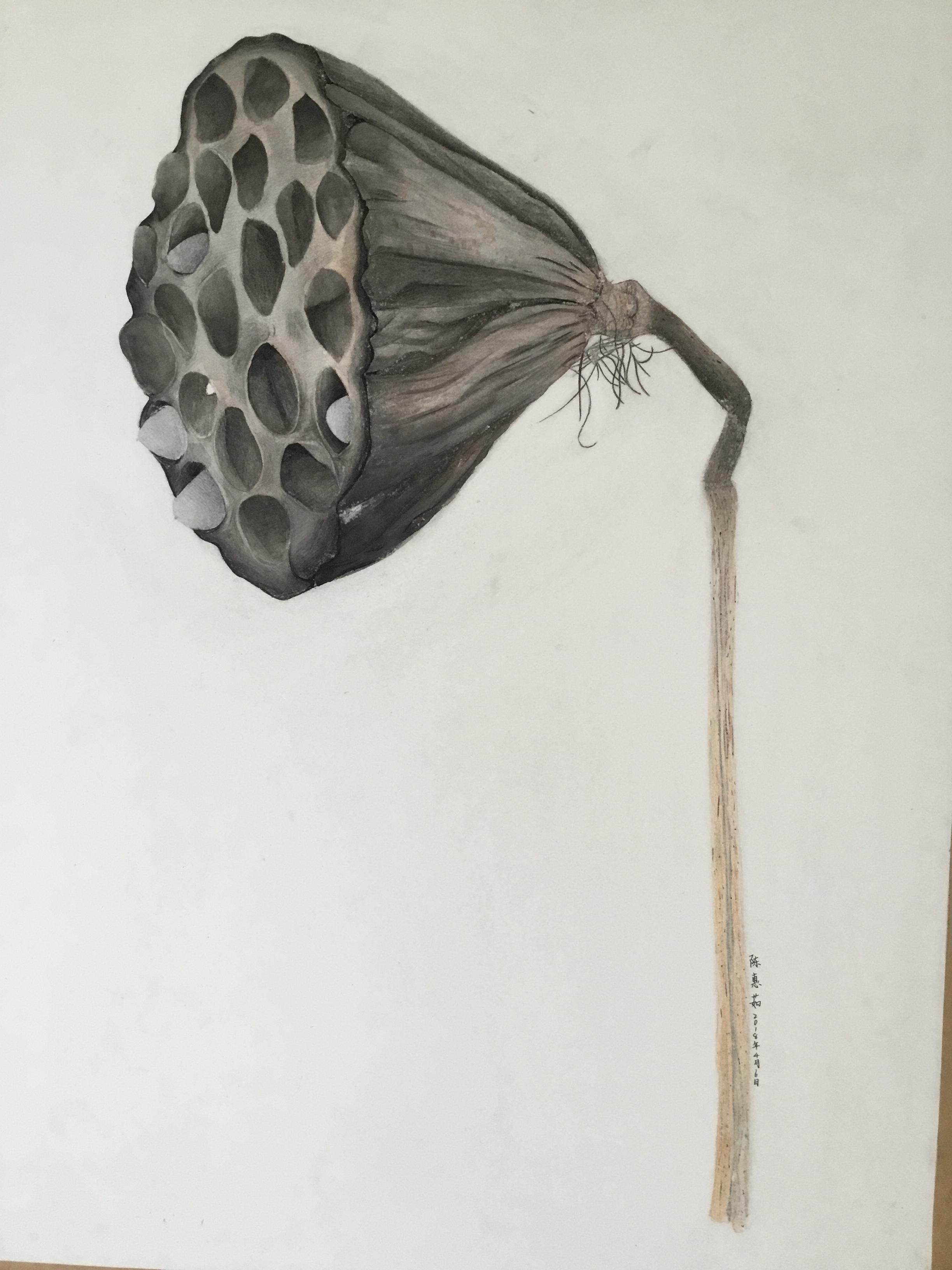 高青县国美艺术学校精微素描作品