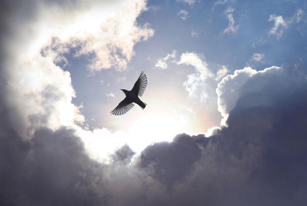 飞行的鸟 只有在高空,才善于伪装 打开的翅膀,虽然有力 风雨之中,得不