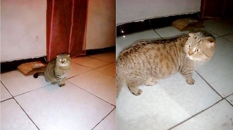 """主人想看看猫咪大晚上在楼道里干嘛,结果出门一看""""面壁思过""""呢"""