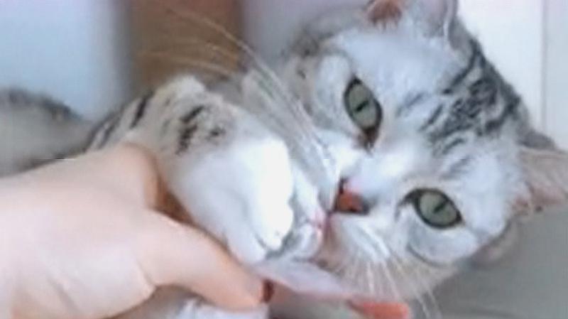 猫妈妈喂奶喂到生无可恋,面对孩子的反应却很暖心