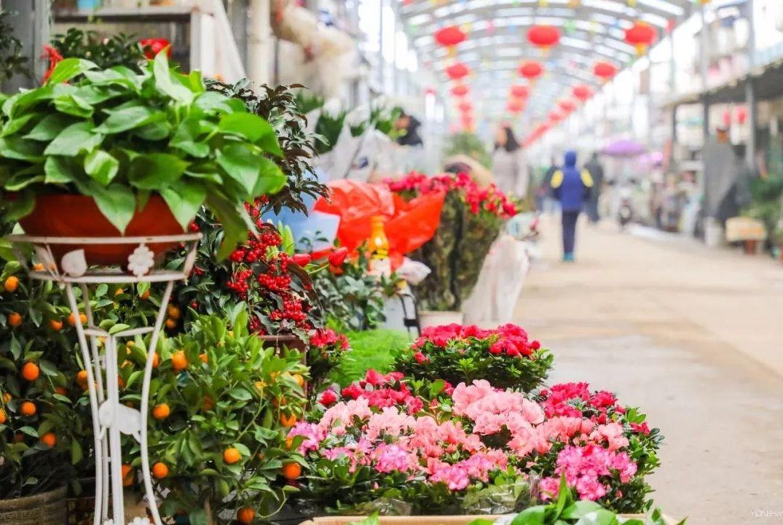 怀揣好奇心去武汉花鸟市场吧!