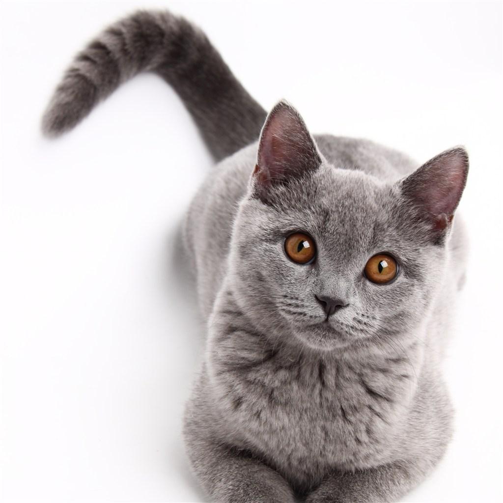 你需要知道的猫尾伤