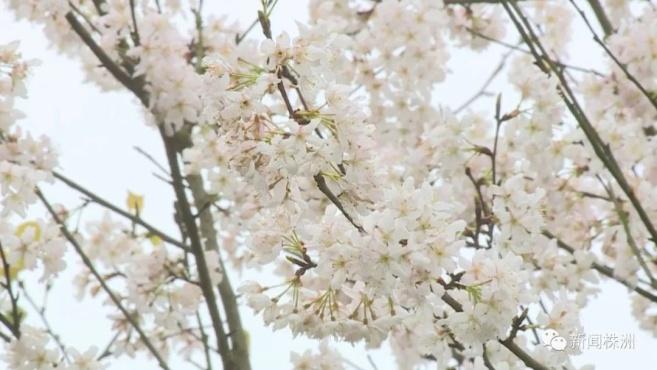 三月花期盛 繁花落花皆是美
