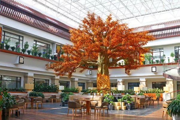 深圳松岗琥珀主题酒店5楼露天休闲厅世上最大琥珀树